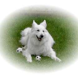 Medaillon Fotogravur nach Ihrem Hunde Foto